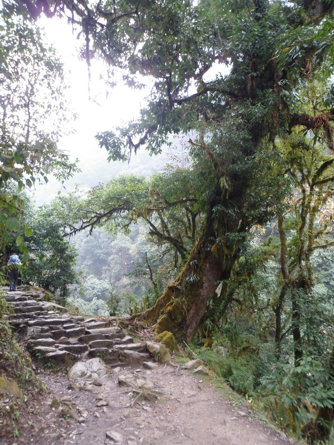 Похід до підніжжя Аннапурни